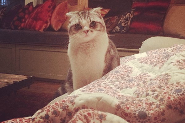 Taylor Swift cat Meredith Grey
