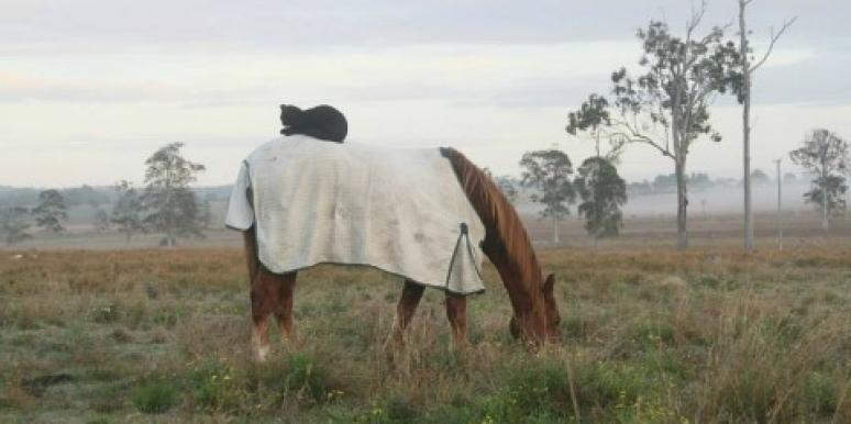 cat-horse