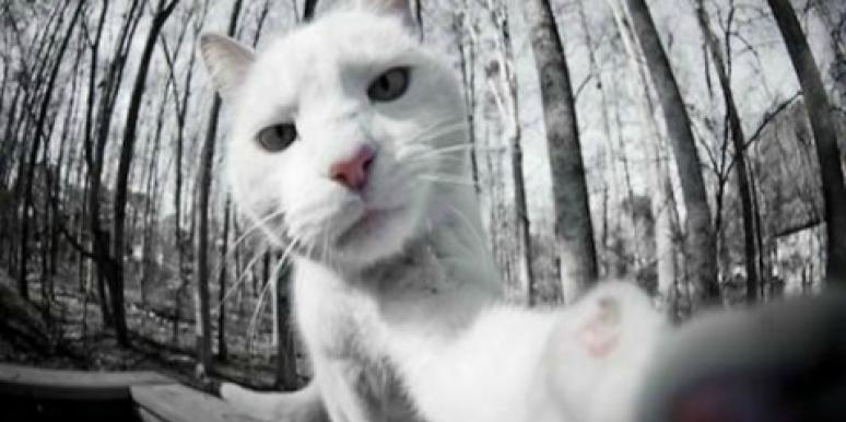 12 Animals Trying To Land A Date With Amazing Selfies