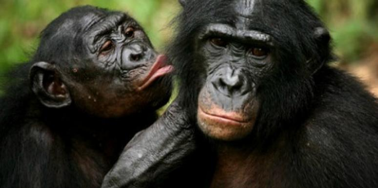 Love: 10 Most Romantic Animals Of All Time