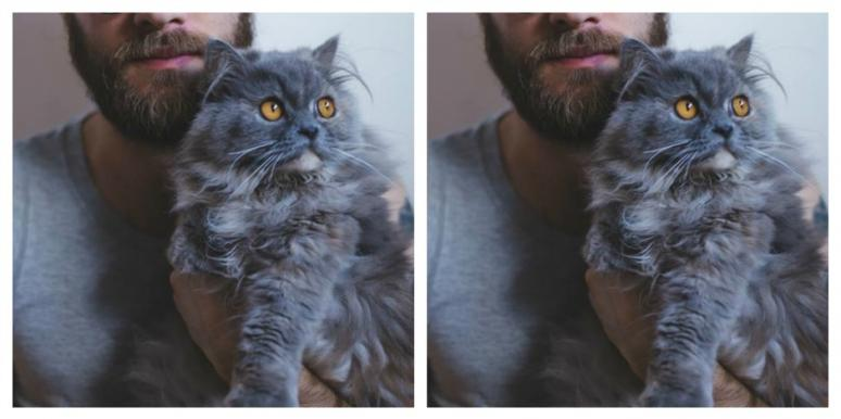men who love cats