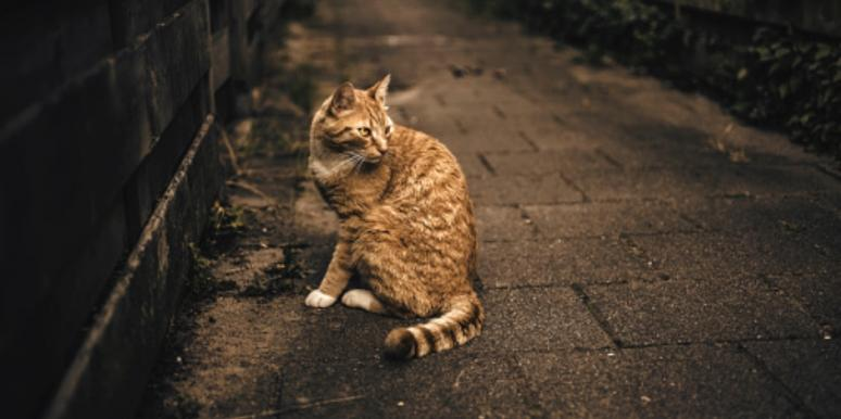 Who Is The Croydon Cat Killer? Details Serial Killer Conspiracy Theory London