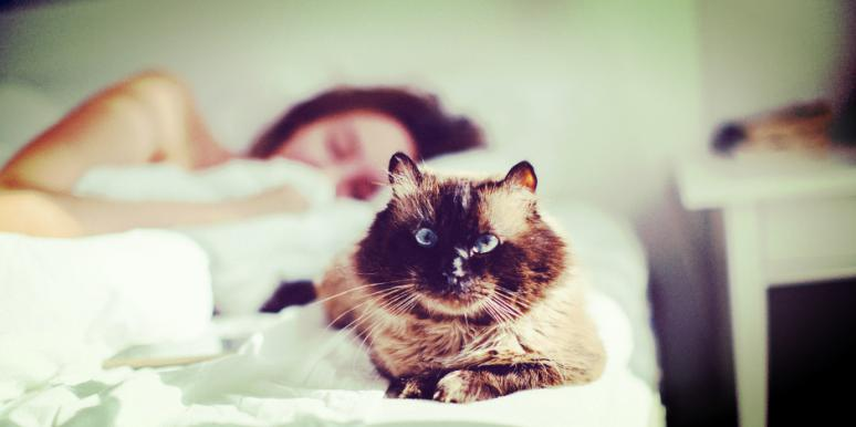 How Choosing To Sleep With Pets Affect Your Relationship, According To The Enneagram