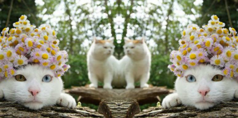 2 cats predict love horoscope based zodiac signs