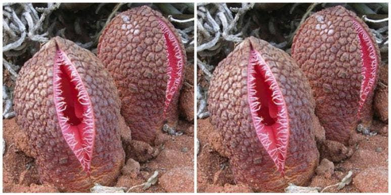 vagina shape orgasm