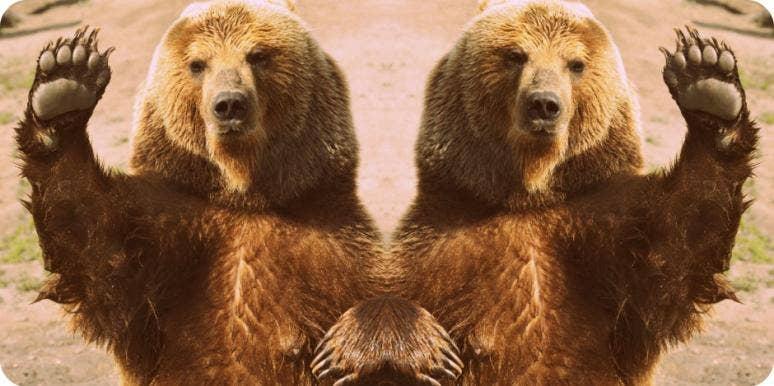 bear personality type