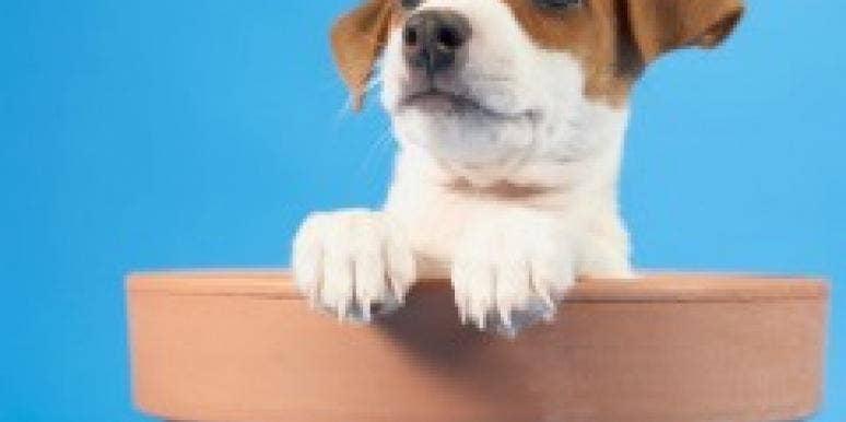 puppy vase alert begging