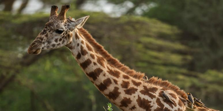 Who Is Tess Thompson Talley? New Details On The Woman Branded A 'White Savage' For Gleefully Killing Giraffe