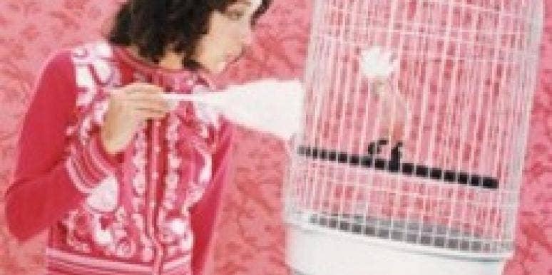 bird cage dust
