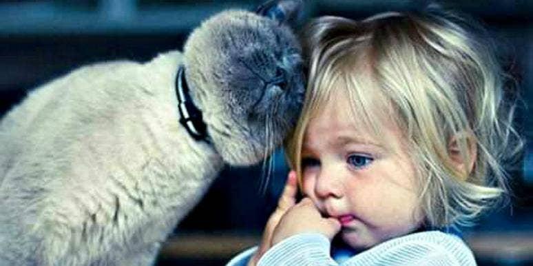 babysitting pets yourtango