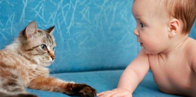 cat and baby on couch