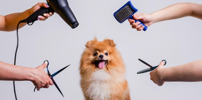Dog Lovers In Japan Are Shaving Their Pups Into Cubes