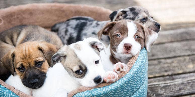 cutest dog breed puppies