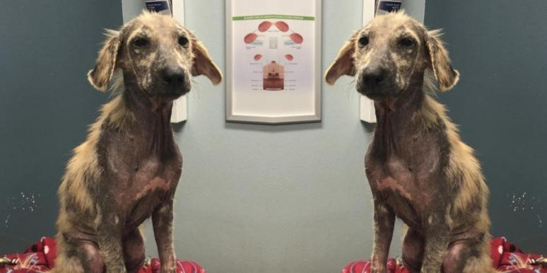 Watch This Scared, Mangy Dog's Inspirational Before & After Transformation
