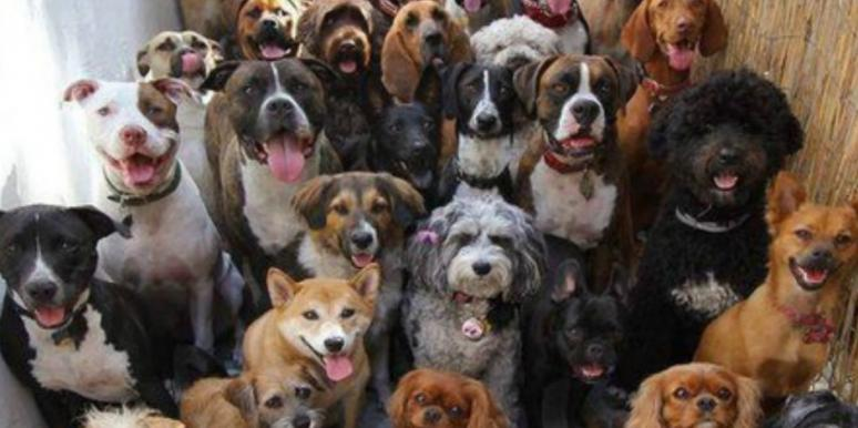 quiz for dog lovers