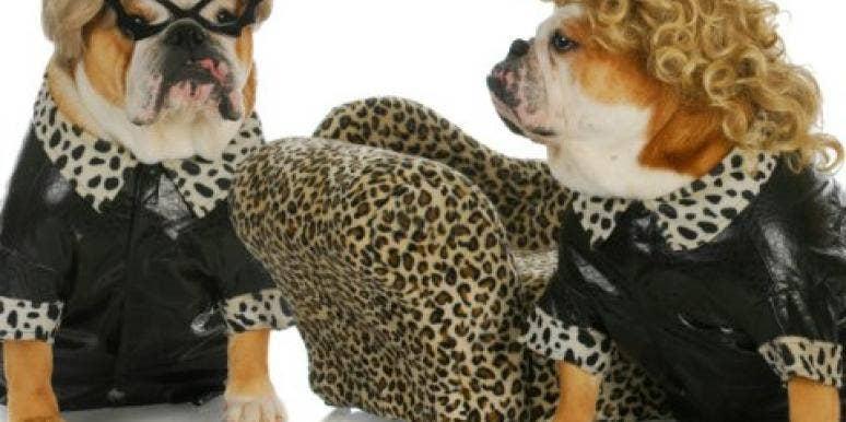 animals dressed up
