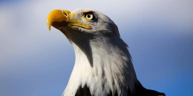 Eagle Symbolism & Meaning (Totem, Spirit & Omens)