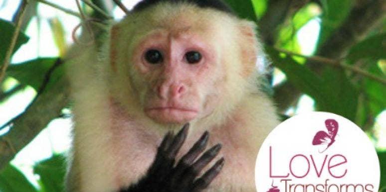 8 Grossest Things Animals Do For Love
