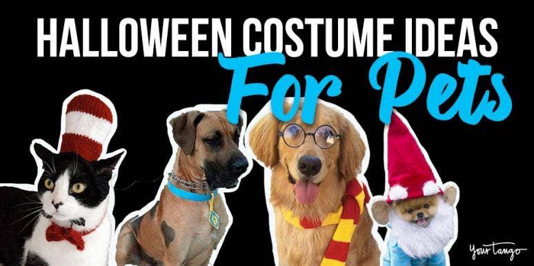 40 Best Dog Halloween Costumes Cat Halloween Costumes