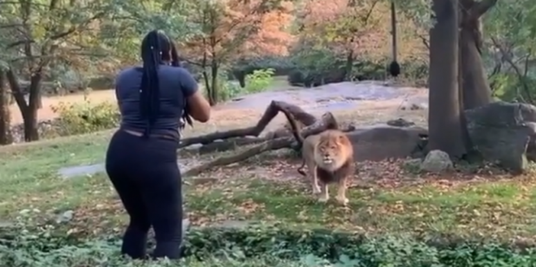 Who Is Myah Autry? Details On 'Crazy Cat Lady' Who Climbed Into The Lion's Den At The Bronx Zoo