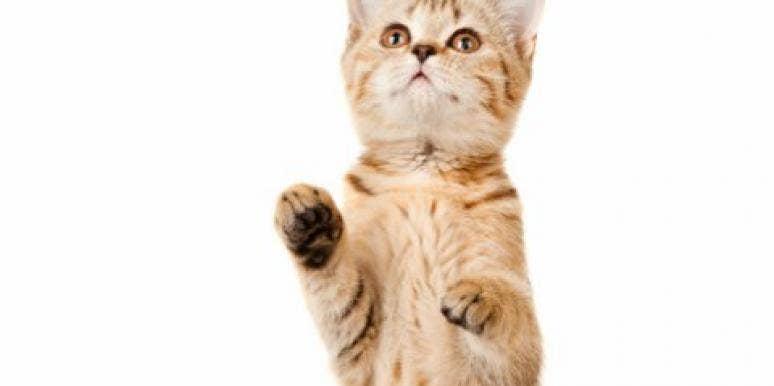 cats doing tricks