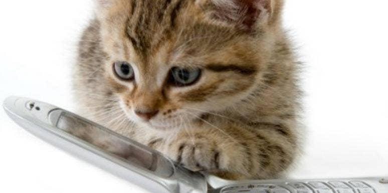 Kitten on a cellphone