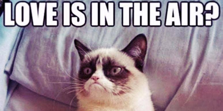 photomania 02b71e5d7372c5deab60429fa690fa49?itok=5NpovMX5 21 best grumpy cat memes and funny quotes about love & life