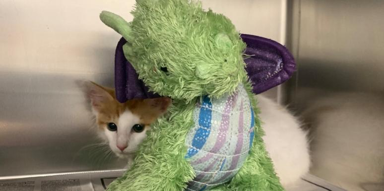 A Kitten's Pet Dragon Helped Him Stay Brave Through Surgery