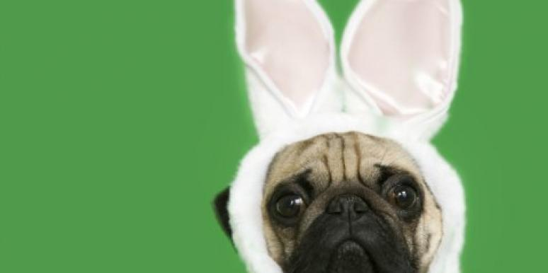 pug wearing bunny ears
