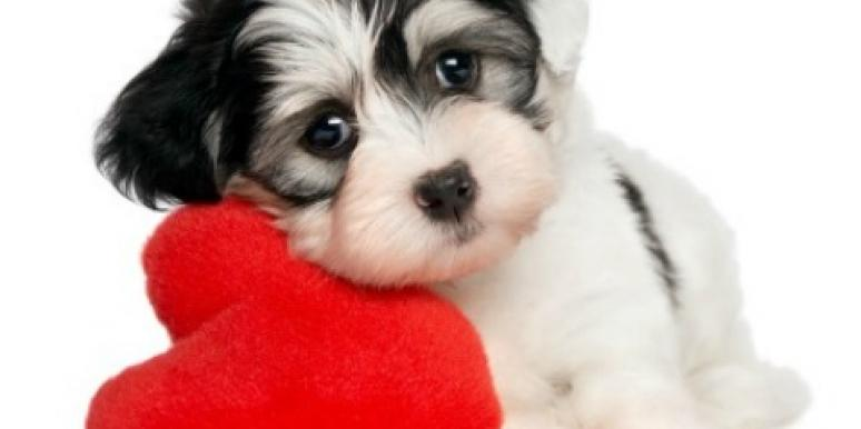 puppy with heart