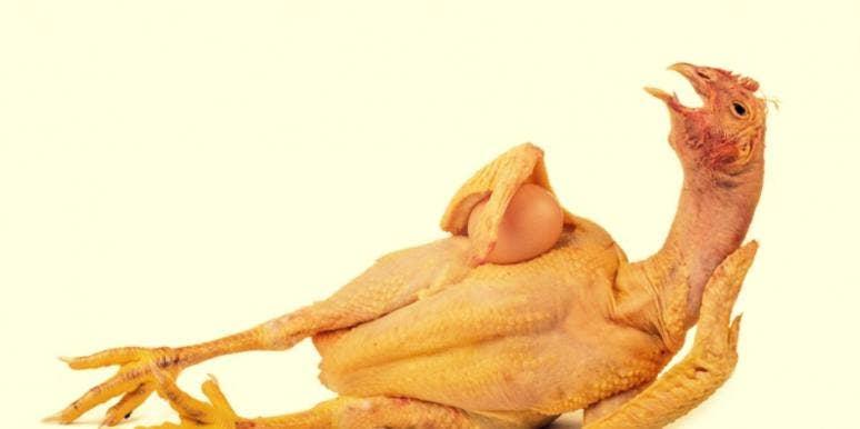 sexy chicken make love