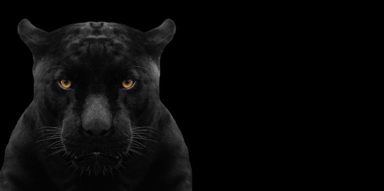 Spiritual Meaning And Symbolism Of A Black Panther