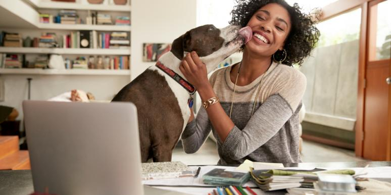 dog licking owner white seated at desk