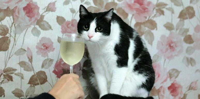 apollo peak cat wine
