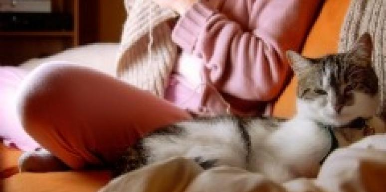 woman knitting sofa cat