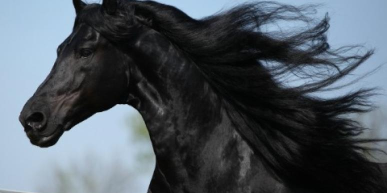 Life Coach: Year Of The Horse Success Advice