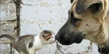 Kiss: 12 Most Adorable Animal Smooches To Make You Melt