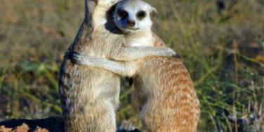 8 Things Meerkats Can Teach Us About Love