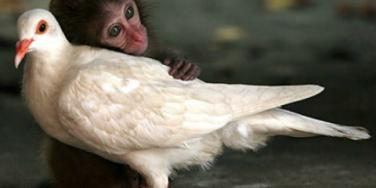 6 Stories Of Interspecies Love to Warm Your Heart