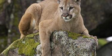 Are You Divorced? 5 Tips To Becoming Cougar [EXPERT]