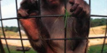 Online Dating For Endangered Species