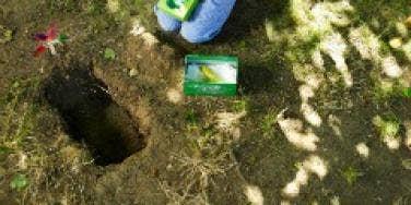 pet burial bury funeral child dig