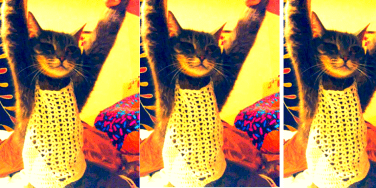 Mom Blasts Company For RIDIC Small Crop Top, Gives To Cat
