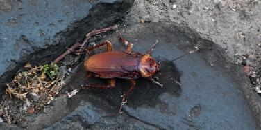 I Named A Hissing Cockroach At The Zoo After My Ex Boyfriend