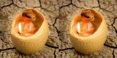 Dinosaur Egg Candle