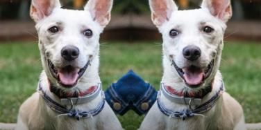 Disabled Dog Abandoned Twice In One Day Finds New Home