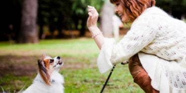 Train Your Pet, Motivate Your Kids [EXPERT]