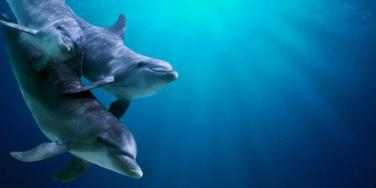 Dolphins Are Enamored By A Nursing Mom At The Zoo