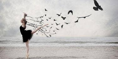 dancer-birds