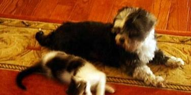 Love Story: Lost Dog & Kitten Are Moving In Together